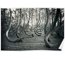 Curved Forest Poster