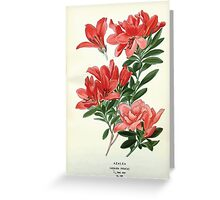Favourite flowers of garden and greenhouse Edward Step 1896 1897 Volume 3 0041 Azalea Greeting Card