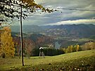 Autumnal by Mojca Savicki