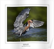 REDDISH EGRET  Egretta rufescens #3 (NOT A PHOTOGRAPH OR PHOTOMANIPULATION) Poster