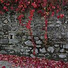 autumn wall by Matt Bishop
