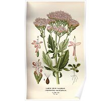 Favourite flowers of garden and greenhouse Edward Step 1896 1897 Volume 2 0148 Large Spur Valerian Poster