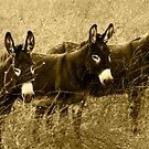 The Three Amigos by Sue Ratcliffe