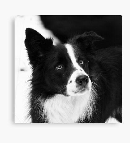 Black & White Dog Canvas Print
