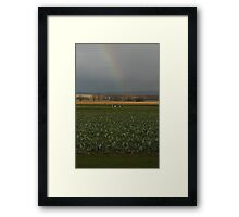 The Rainbow Beyond The Cabbage Field Framed Print