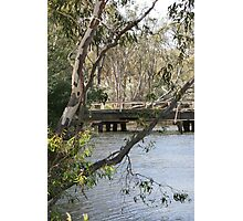 Tranquil Bush Scene in Victoria Photographic Print