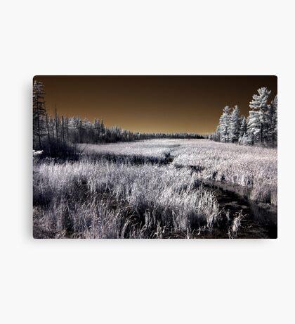 The Constance Lake Marsh Canvas Print