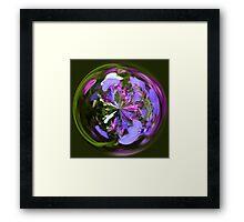 Spherical Lobelia Framed Print