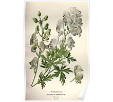 Favourite flowers of garden and greenhouse Edward Step 1896 1897 Volume 1 0047 Monkshood Poster