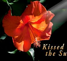 Kissed by the Sun Card by imagetj