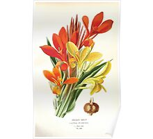 Favourite flowers of garden and greenhouse Edward Step 1896 1897 Volume 4 0067 Indian Shot Poster
