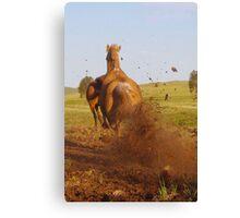 Hoon'en Horse Canvas Print
