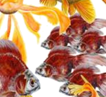 Freshwater Aquarium Sticker