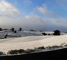 Snow in Tasmania by Josie Jackson