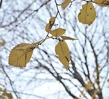 Autumn Silence by Aritheeagle