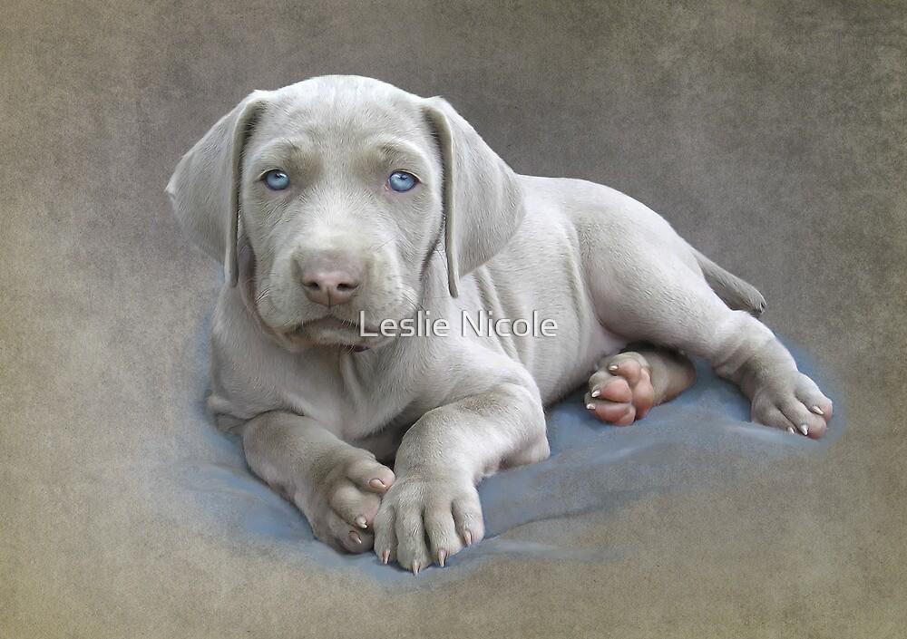 Weimaraner Puppy Sketch by Leslie Nicole