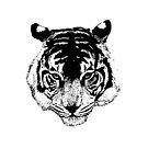 Tiger  by Coralie Plozza