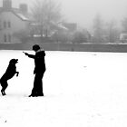 Dog in the Snow - Fetch... by Matthew Doerr