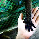 hands reaching out by lensbaby