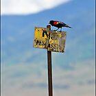 Bird Perch - Bird on Old No Trespassing Sign by tc5953