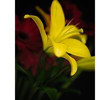 Low-key Yellow Lily Photographic Print