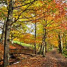 Autumn Woodland Walk by Jim Wilson