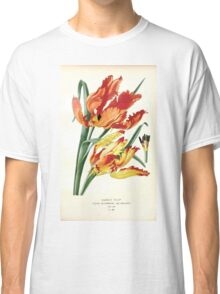 Favourite flowers of garden and greenhouse Edward Step 1896 1897 Volume 4 0215 Parrot Tulip Classic T-Shirt