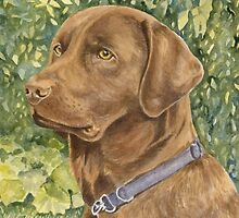 Holly the Chocolate Labrador (Final Version) by FranEvans