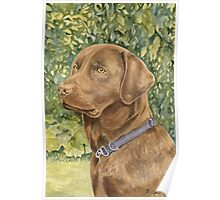 Holly the Chocolate Labrador (Final Version) Poster