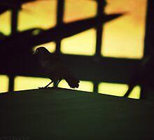 dear god make me a bird  by S .