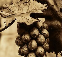 Bronze Grapes by pixies000