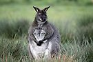WALLABY by Debbie Ashe