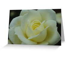 White Rose of Autumn Greeting Card