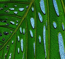 monstera abstract by Sherilee Evelyn