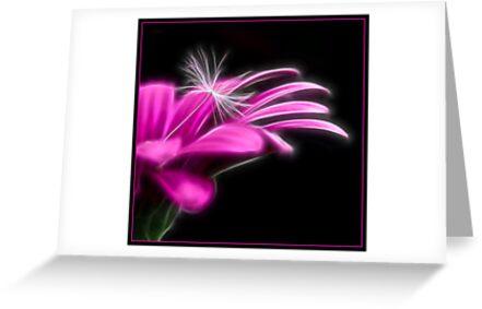 Osteospernum Fractalius Style by Chrissie Taylor
