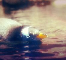 Penguin by DuranBlakeley
