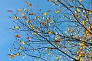 And Then Sun-Kissed Leaves Tickled The Sky... by Ainsley Kellar Creations