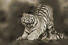 Stretching tiger by Debbie Ashe