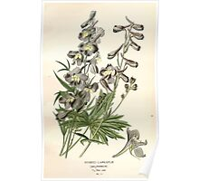 Favourite flowers of garden and greenhouse Edward Step 1896 1897 Volume 1 0044 Hybrid Larkspur Poster