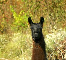 Hey, who are You? Have you got any Food? Arkansas by David  Hughes
