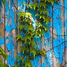 Hedera helix by blue door by Linn Arvidsson