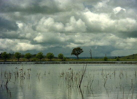 Wet Season by Kitsmumma