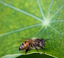Bee on the green by Cathy Middleton