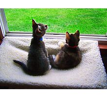Cats in the window Photographic Print