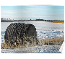 Frosty Bale, central Alberta in winter, Canada Poster