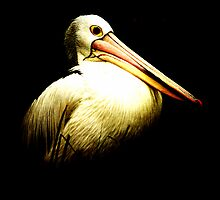 Pelican - Melbourne Zoo by Deb Gibbons