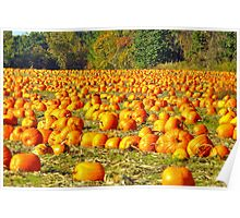 Pumpkin Field in Autumn, Ontario, Canada Poster