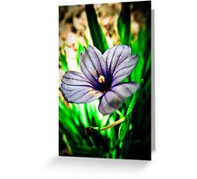 Voilet Touch Greeting Card