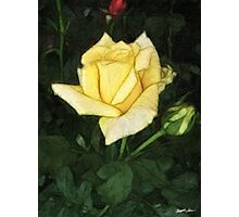 Elegant Yellow Rose 1 Painterly Photographic Print
