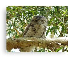 Tawney Frogmouth Canvas Print
